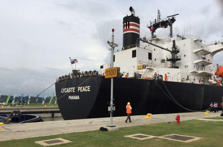 Lycaste Peace
