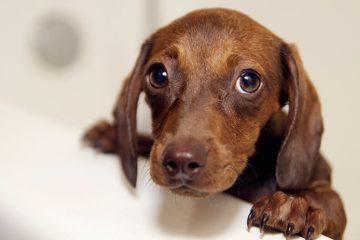 alimentos que tu perro puede y no puede comer