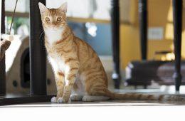 gatos en panama