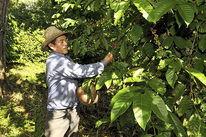 ESPECIALES  | PANAMÁ, CAFÉ PARA EL MUNDO