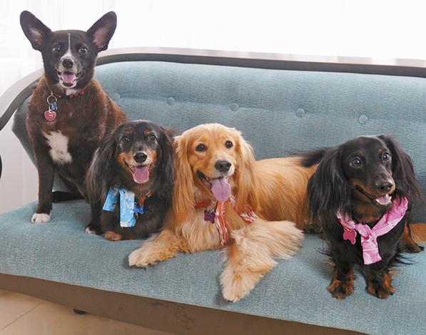 GENTE PET'S LIFE  | Khadine Sanhueza y sus cuatro ángeles con cola