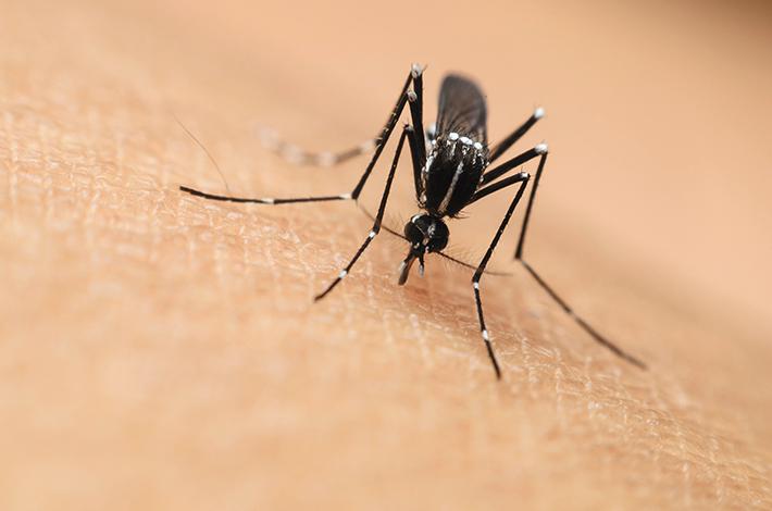 ESPECIALES LIFESTYLE SALUD  | Lucha contra la malaria, en marcha