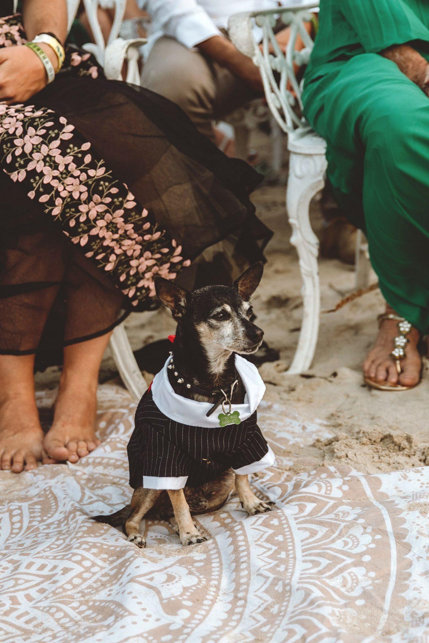 GENTE PET'S LIFE  | SACHA PYTKA-HOTSKO y Coat