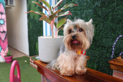 GENTE PET'S LIFE  | DAYANA DE STAIR Y THOR